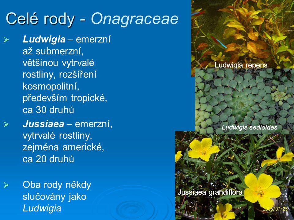 Celé rody - Onagraceae Ludwigia – emerzní až submerzní, většinou vytrvalé rostliny, rozšíření kosmopolitní, především tropické, ca 30 druhů.