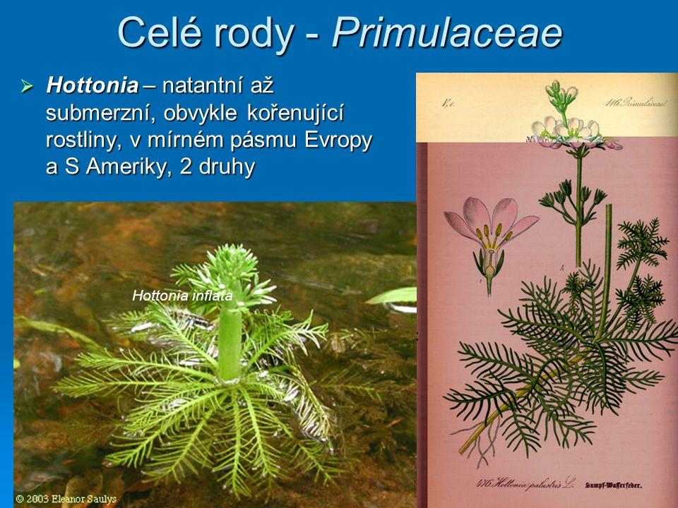 Celé rody - Primulaceae