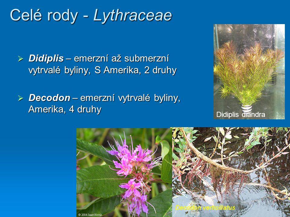 Celé rody - Lythraceae Didiplis – emerzní až submerzní vytrvalé byliny, S Amerika, 2 druhy. Decodon – emerzní vytrvalé byliny, Amerika, 4 druhy.