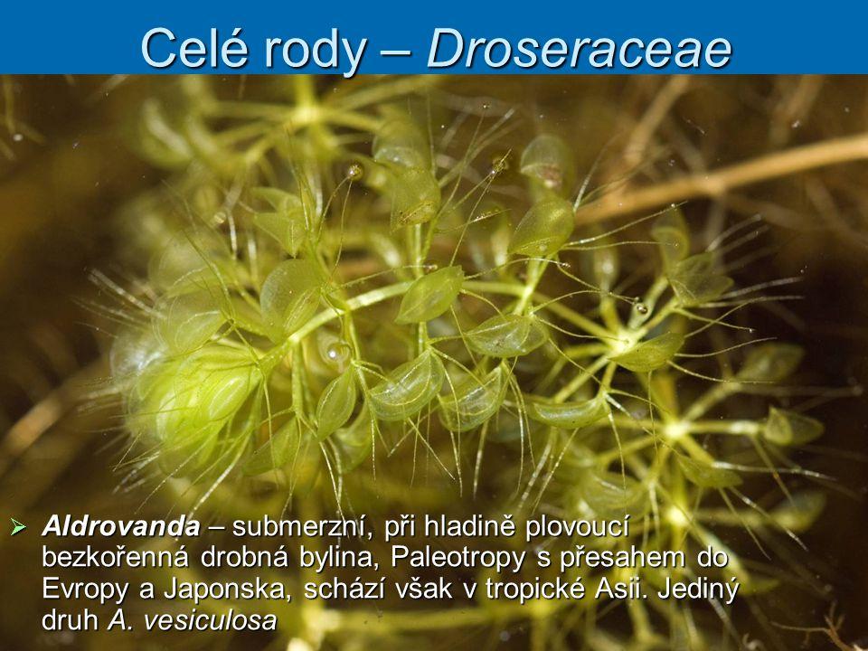 Celé rody – Droseraceae