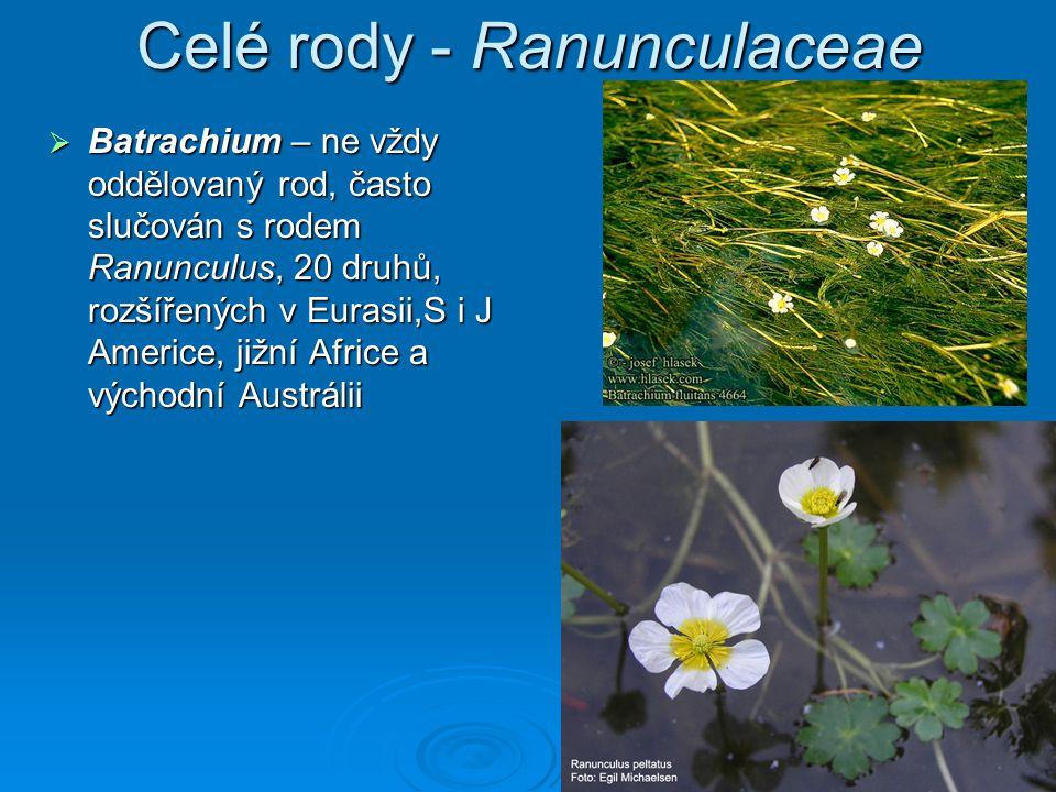 Celé rody - Ranunculaceae
