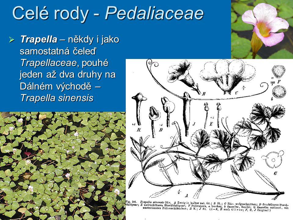 Celé rody - Pedaliaceae