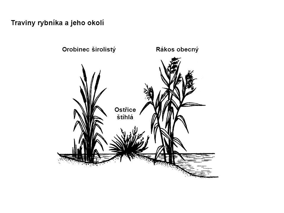 Traviny rybníka a jeho okolí