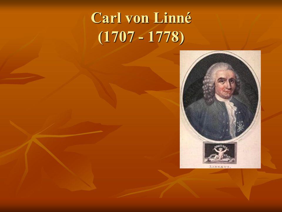 Carl von Linné (1707 - 1778)