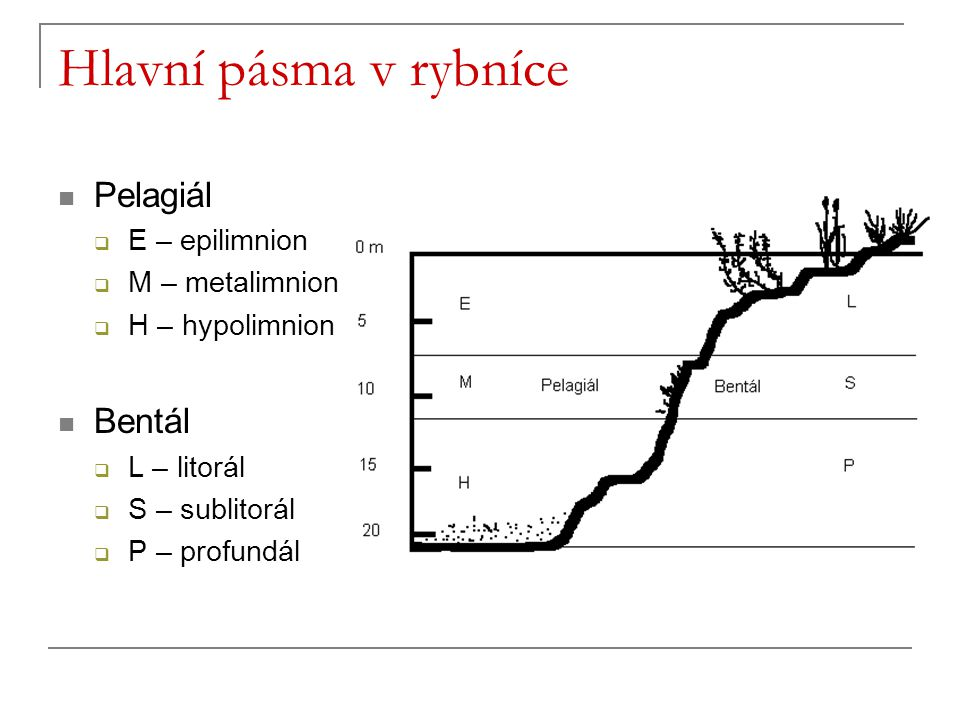 Hlavní pásma v rybníce Pelagiál Bentál E – epilimnion M – metalimnion