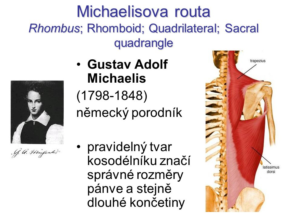 Michaelisova routa Rhombus; Rhomboid; Quadrilateral; Sacral quadrangle