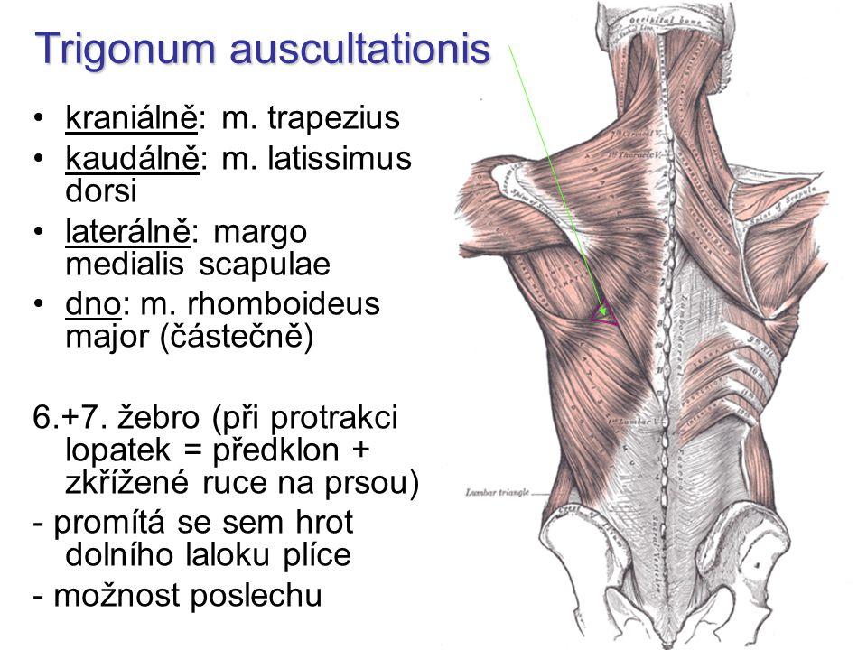 Trigonum auscultationis