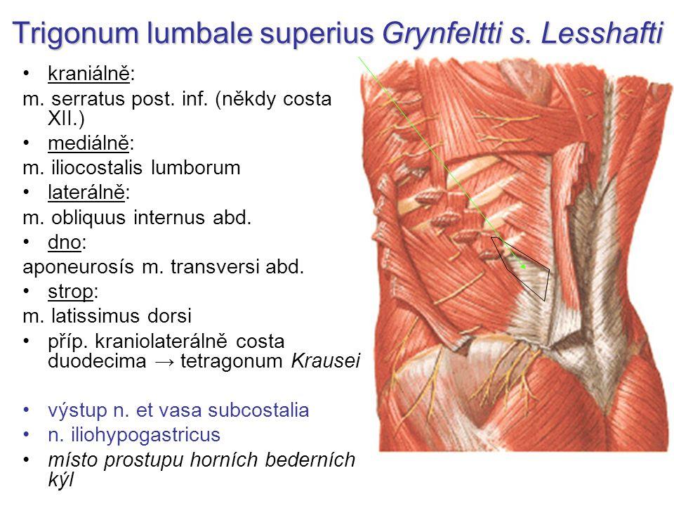 Trigonum lumbale superius Grynfeltti s. Lesshafti