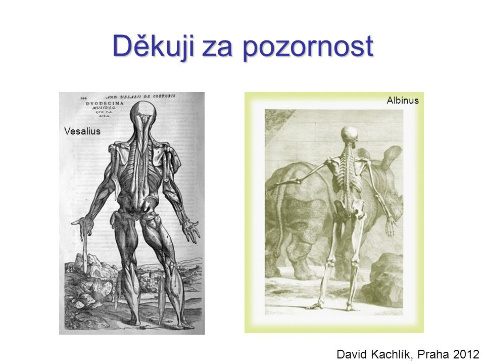 Děkuji za pozornost Albinus Vesalius David Kachlík, Praha 2012