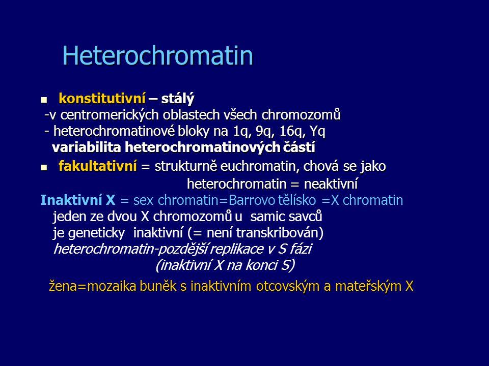 Heterochromatin konstitutivní – stálý