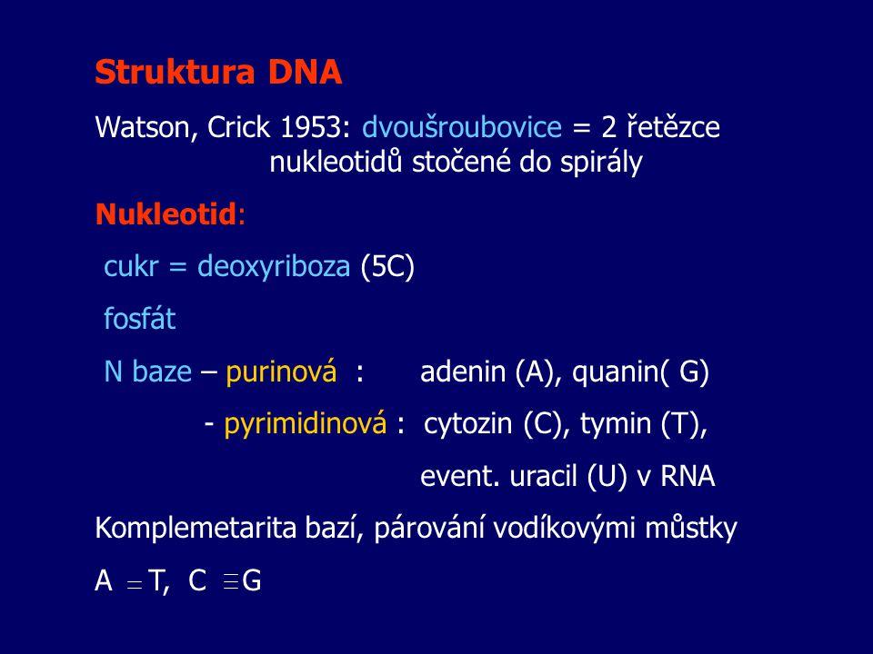Struktura DNA Watson, Crick 1953: dvoušroubovice = 2 řetězce nukleotidů stočené do spirály. Nukleotid: