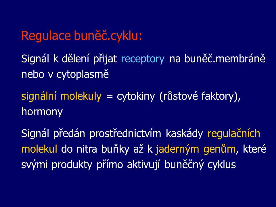 Regulace buněč.cyklu: Signál k dělení přijat receptory na buněč.membráně nebo v cytoplasmě. signální molekuly = cytokiny (růstové faktory), hormony.
