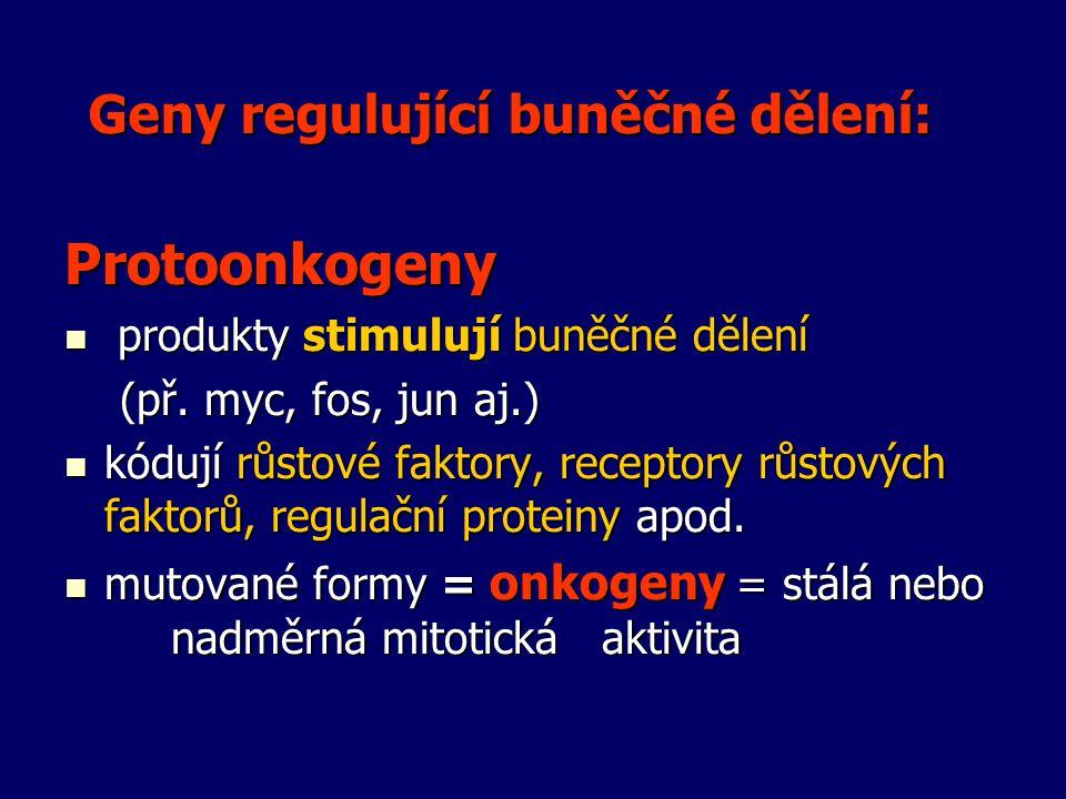 Geny regulující buněčné dělení:
