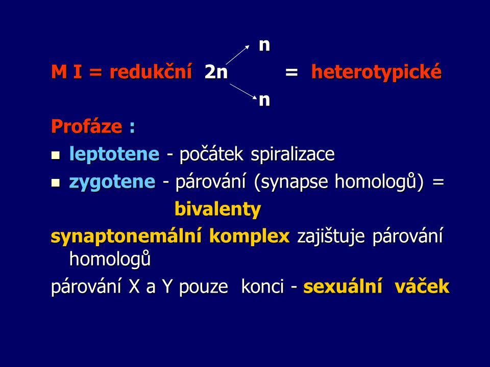 n M I = redukční 2n = heterotypické. Profáze : leptotene - počátek spiralizace. zygotene - párování (synapse homologů) =