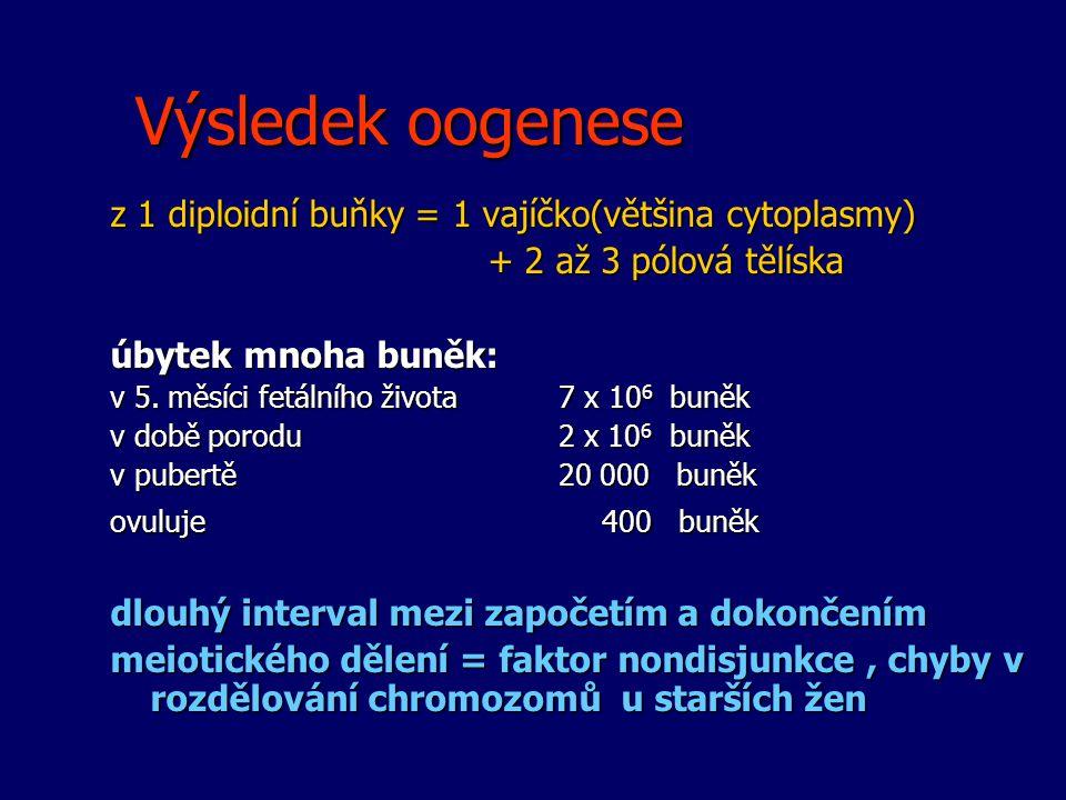 Výsledek oogenese z 1 diploidní buňky = 1 vajíčko(většina cytoplasmy)