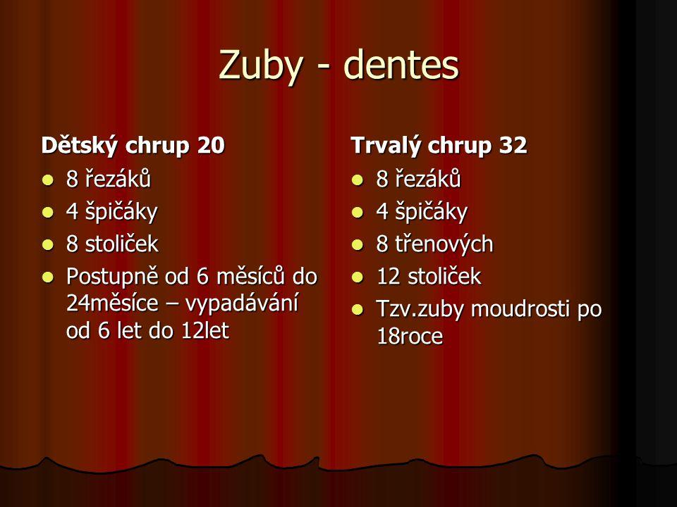 Zuby - dentes Dětský chrup 20 Trvalý chrup 32 8 řezáků 4 špičáky