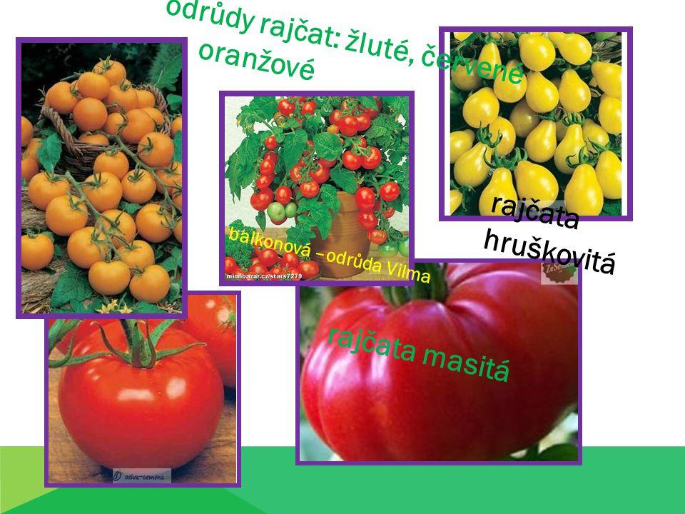 oranžové rajčata hruškovitá rajčata masitá balkonová –odrůda Vilma