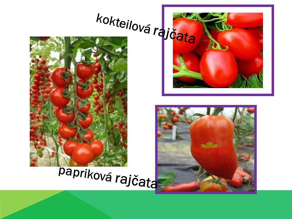 kokteilová rajčata papriková rajčata