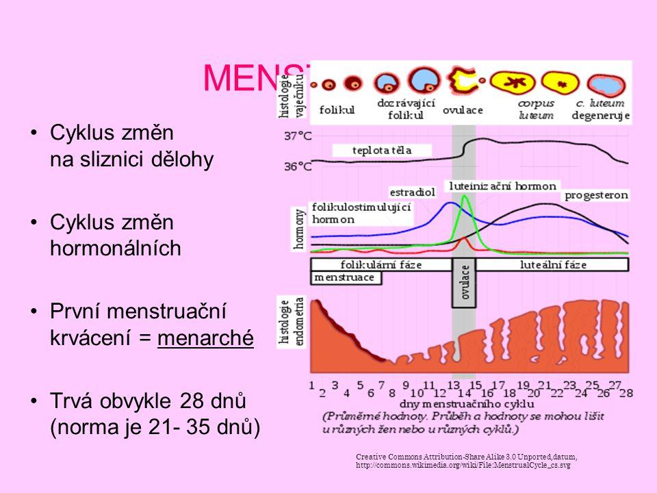 MENSTRUACE Cyklus změn na sliznici dělohy Cyklus změn hormonálních