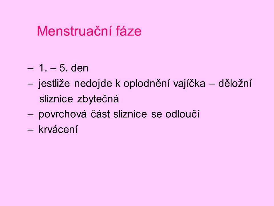Menstruační fáze 1. – 5. den. jestliže nedojde k oplodnění vajíčka – děložní. sliznice zbytečná. povrchová část sliznice se odloučí.