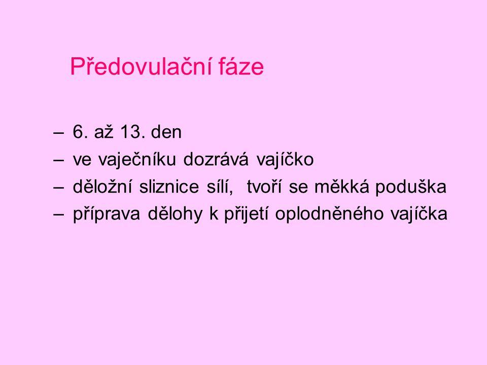 Předovulační fáze 6. až 13. den ve vaječníku dozrává vajíčko