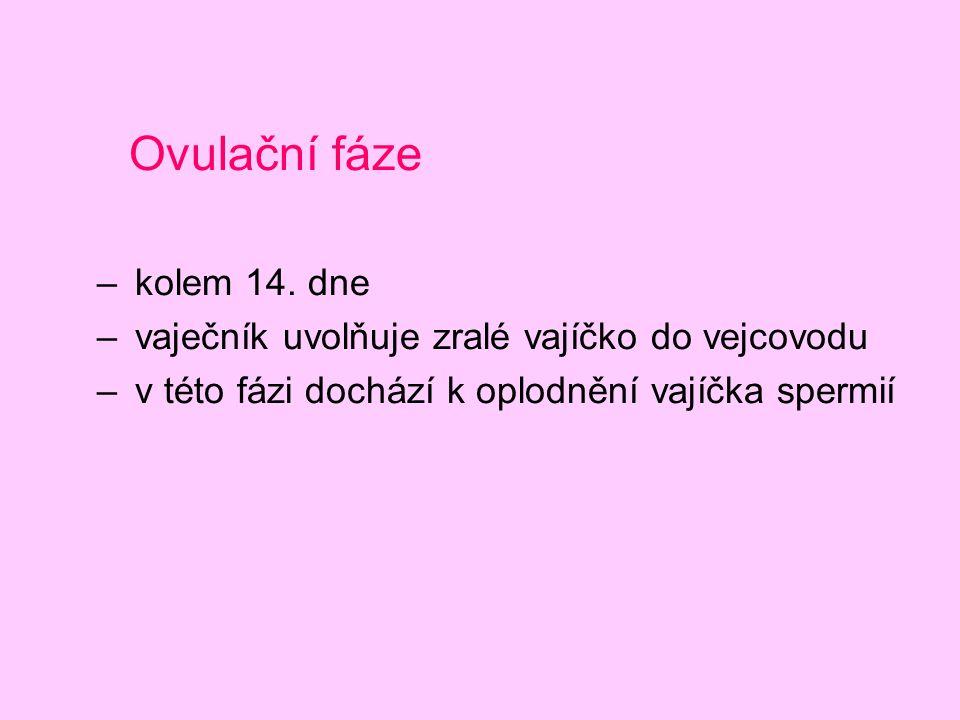 Ovulační fáze kolem 14. dne