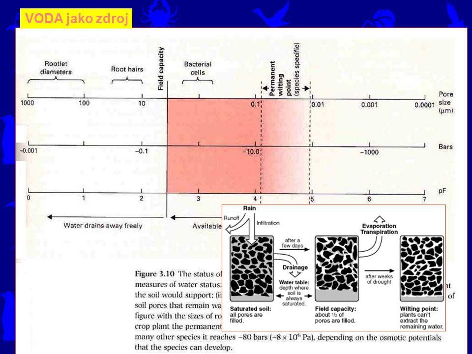 VODA jako zdroj Přítomnost vody v buňkách je podmínkou jakékoliv metabolické aktivity.