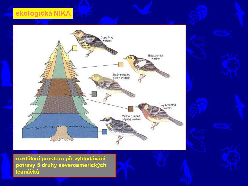 ekologická NIKA rozdělení prostoru při vyhledávání potravy 5 druhy severoamerických lesnáčků