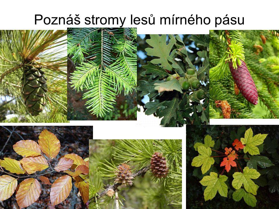 Poznáš stromy lesů mírného pásu