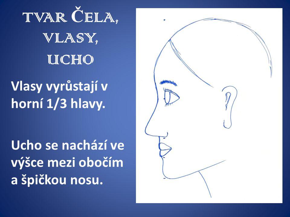 TVAR ČELA, VLASY, UCHO Vlasy vyrůstají v horní 1/3 hlavy.