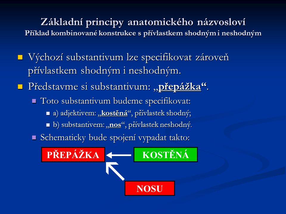 Základní principy anatomického názvosloví Příklad kombinované konstrukce s přívlastkem shodným i neshodným