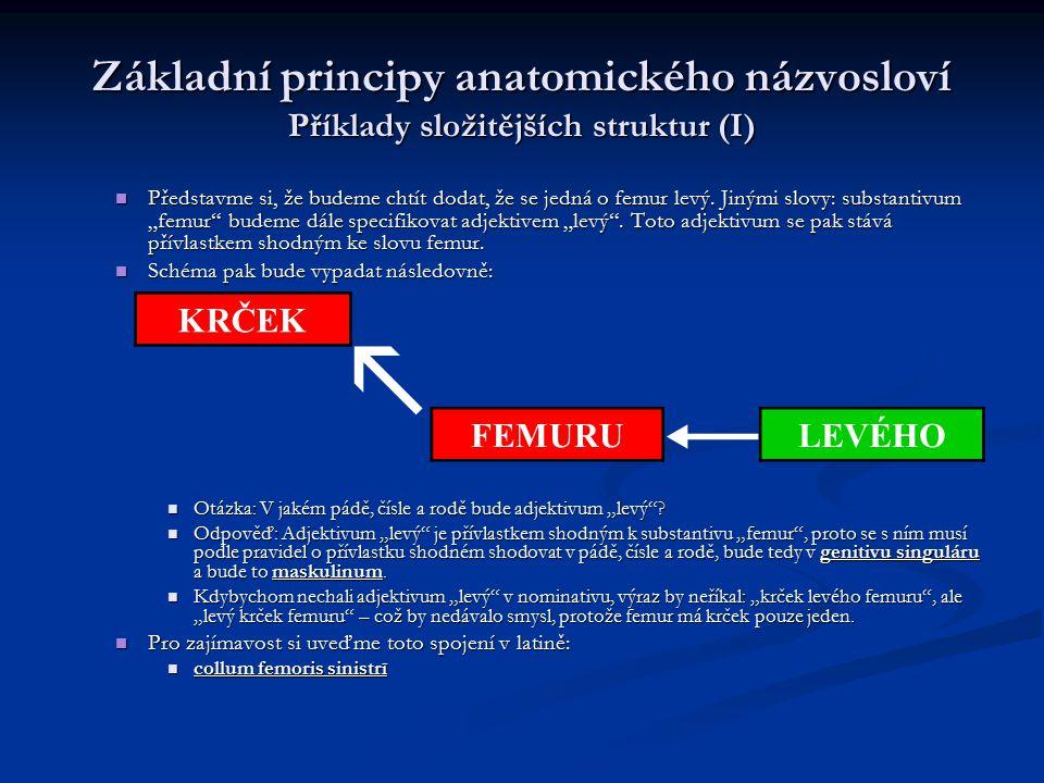 Základní principy anatomického názvosloví Příklady složitějších struktur (I)