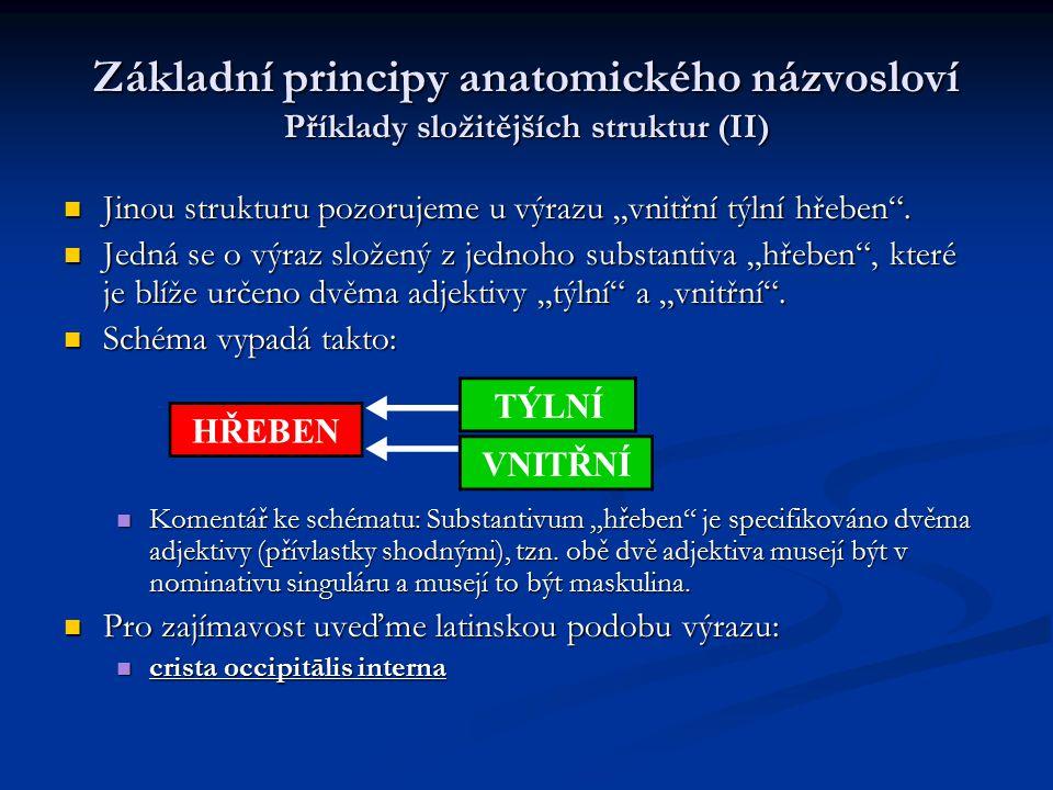 Základní principy anatomického názvosloví Příklady složitějších struktur (II)