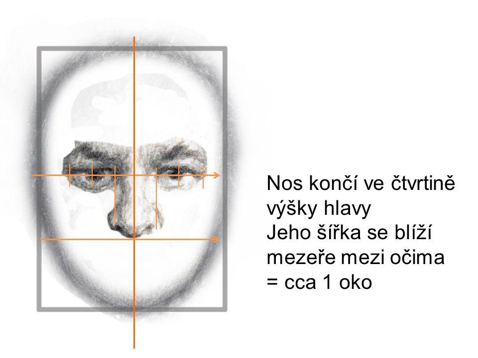 Nos končí ve čtvrtině výšky hlavy Jeho šířka se blíží mezeře mezi očima