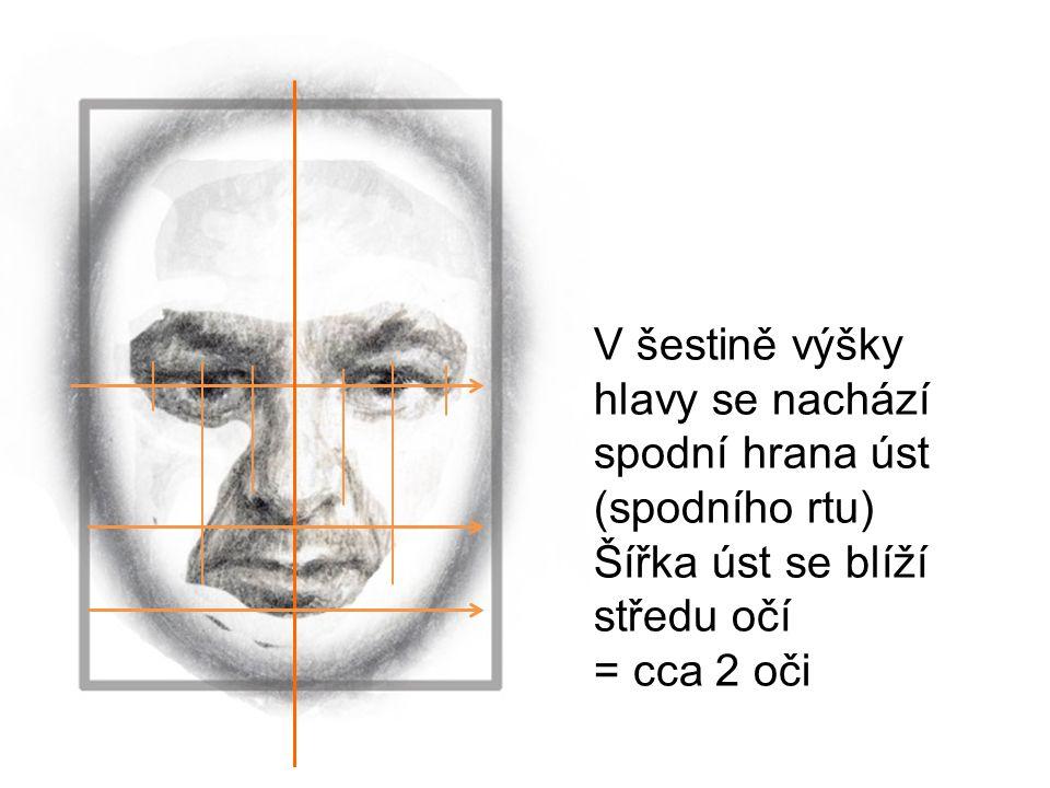V šestině výšky hlavy se nachází spodní hrana úst (spodního rtu) Šířka úst se blíží středu očí