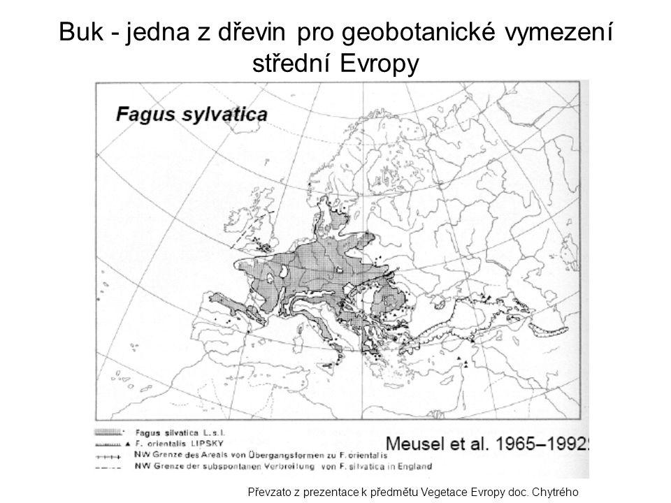 Buk - jedna z dřevin pro geobotanické vymezení střední Evropy