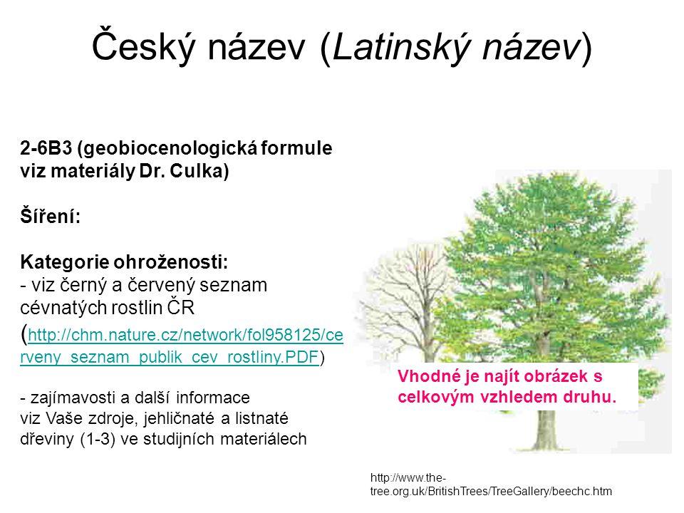 Český název (Latinský název)