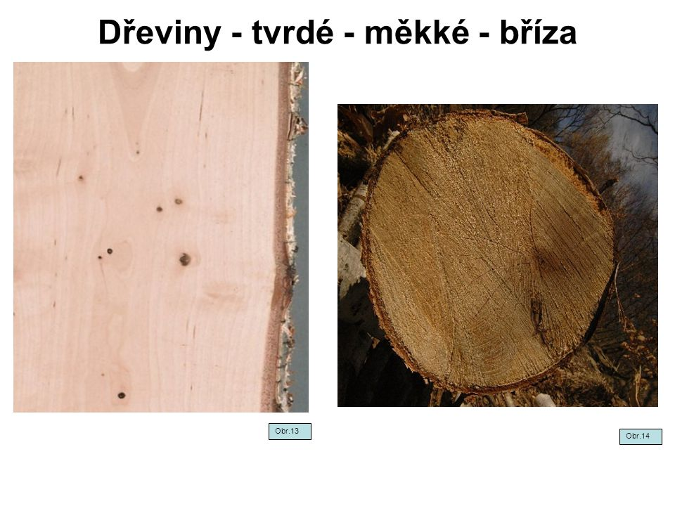 Dřeviny - tvrdé - měkké - bříza