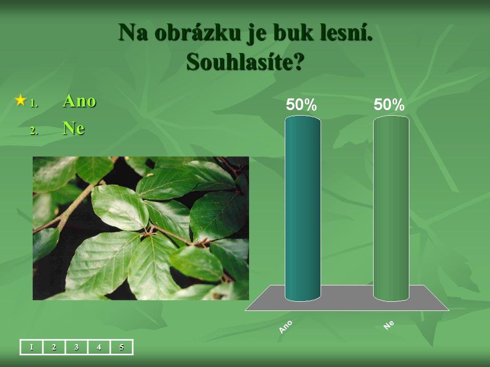 Na obrázku je buk lesní. Souhlasíte