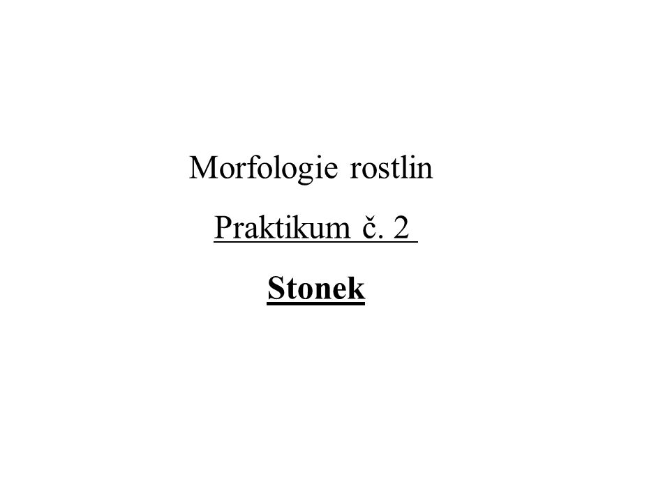 Morfologie rostlin Praktikum č. 2 Stonek