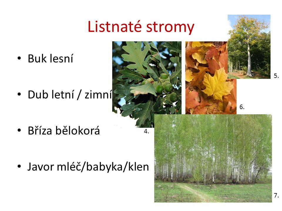 Listnaté stromy Buk lesní Dub letní / zimní Bříza bělokorá