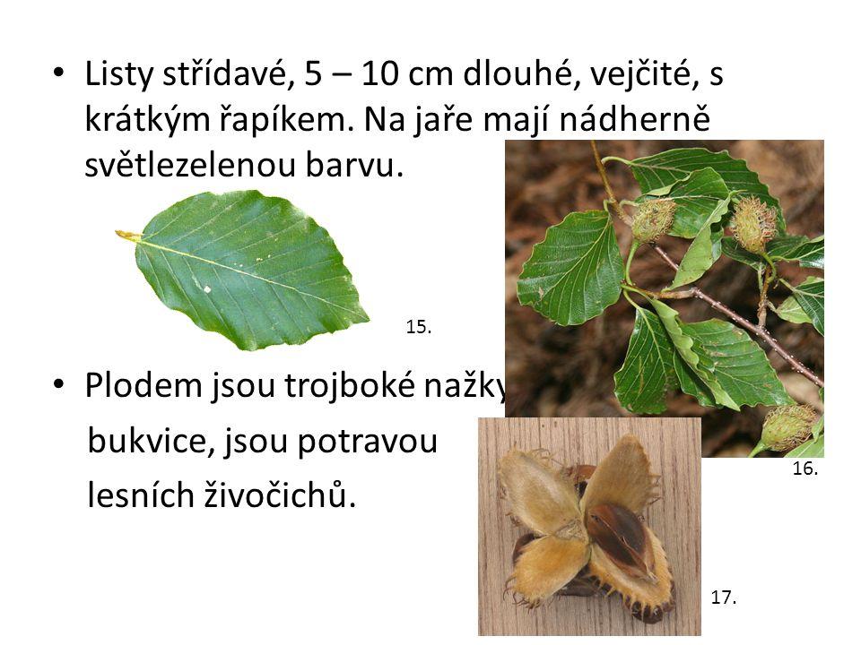 Plodem jsou trojboké nažky bukvice, jsou potravou lesních živočichů.