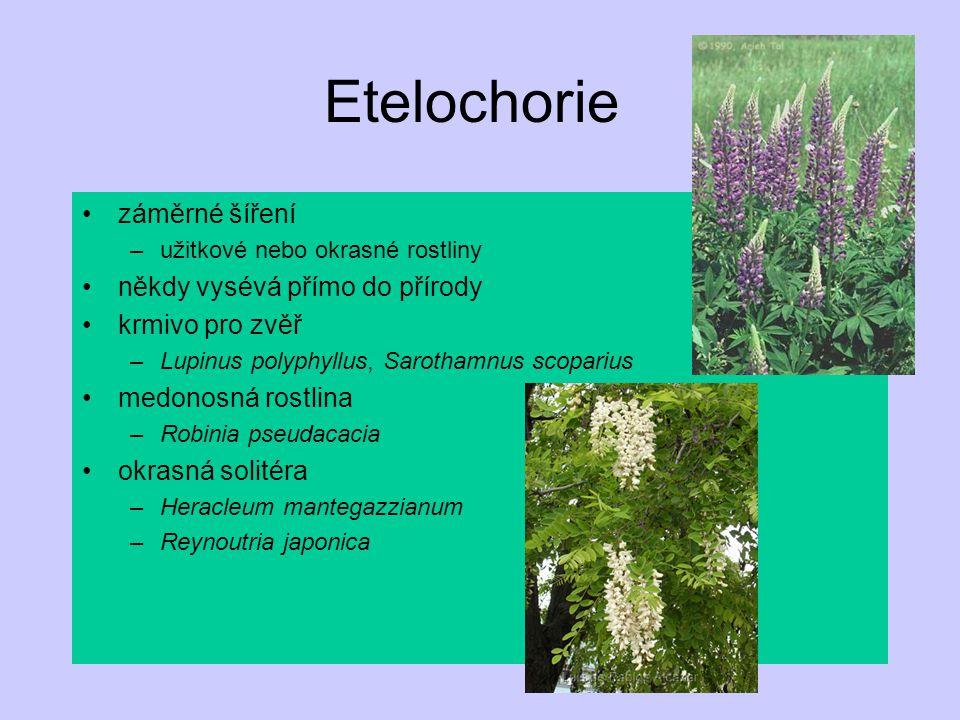 Etelochorie záměrné šíření někdy vysévá přímo do přírody