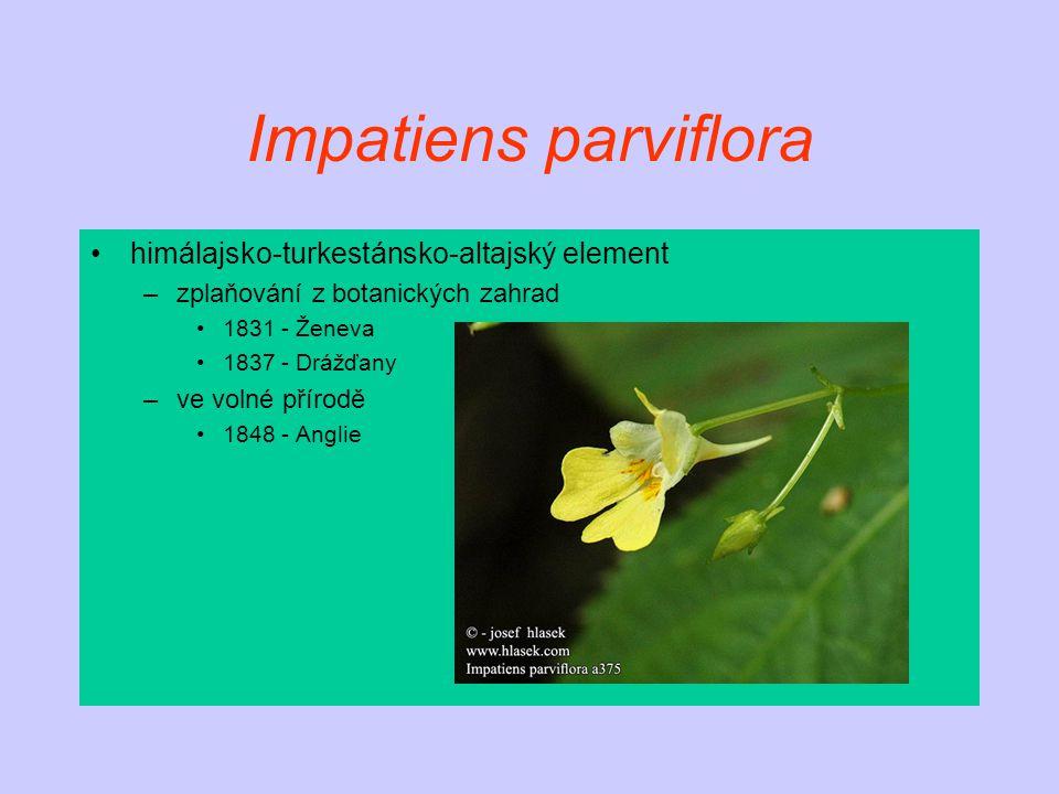 Impatiens parviflora himálajsko-turkestánsko-altajský element