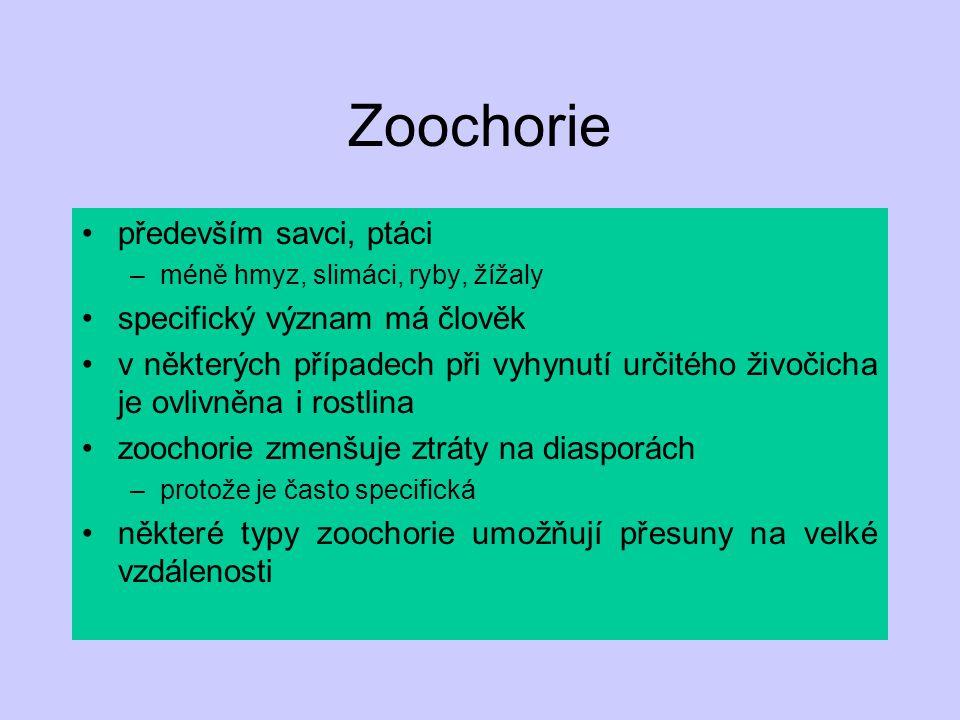 Zoochorie především savci, ptáci specifický význam má člověk
