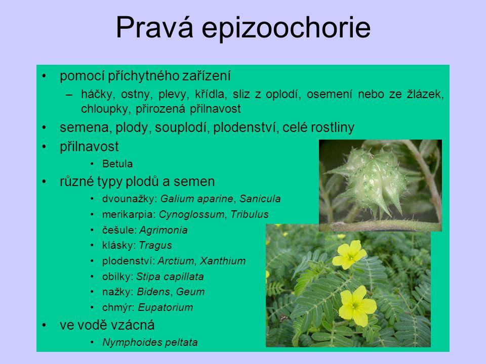 Pravá epizoochorie pomocí příchytného zařízení