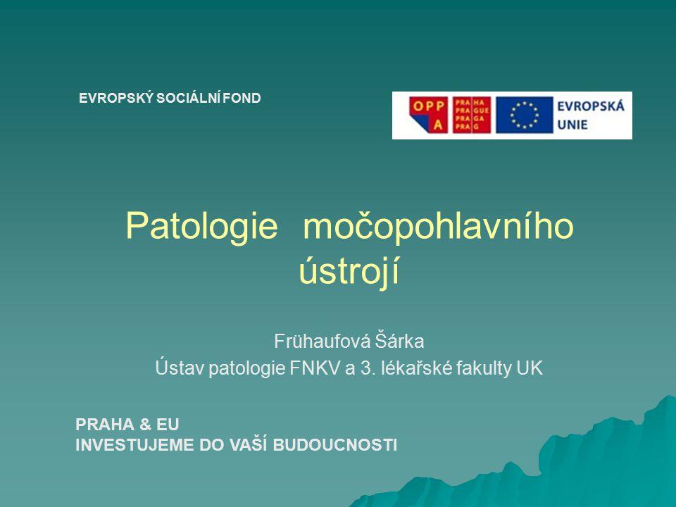 Patologie močopohlavního ústrojí