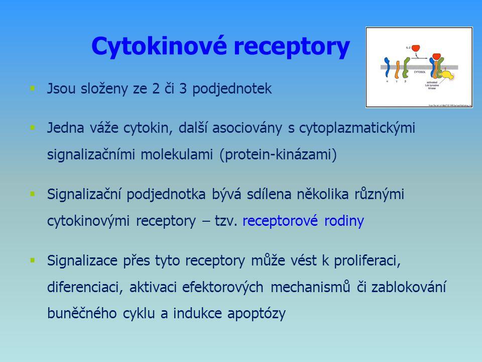 Cytokinové receptory Jsou složeny ze 2 či 3 podjednotek