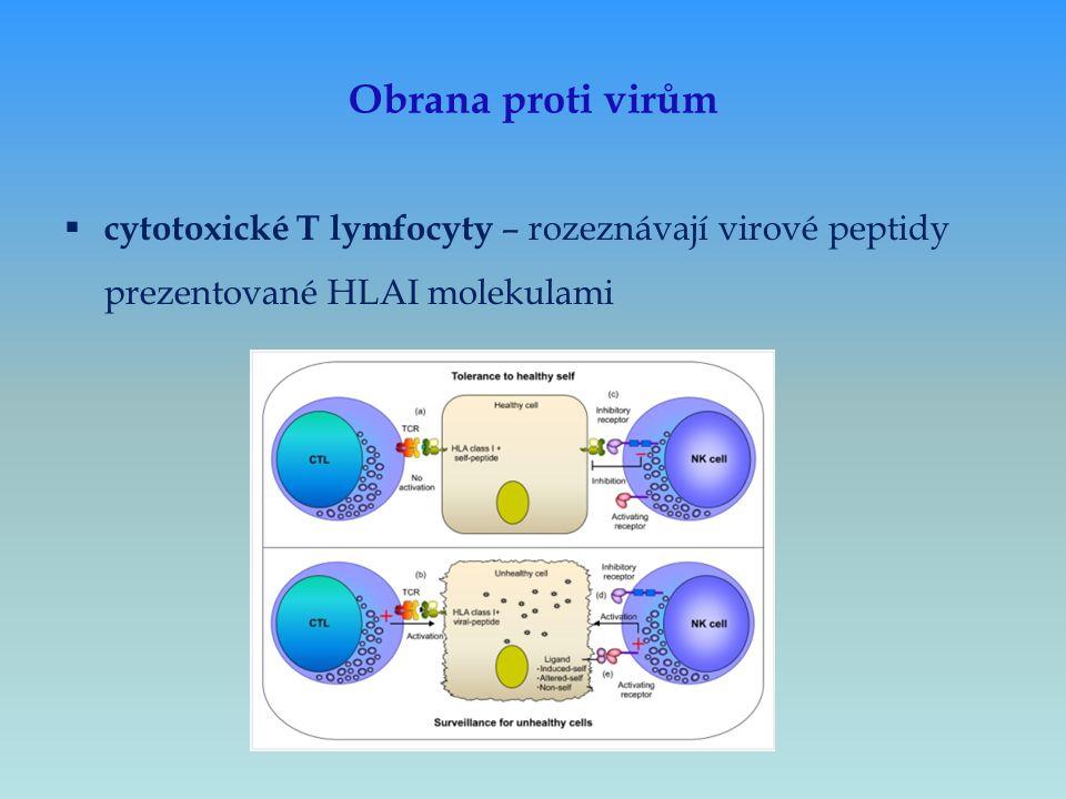 Obrana proti virům cytotoxické T lymfocyty – rozeznávají virové peptidy prezentované HLAI molekulami.