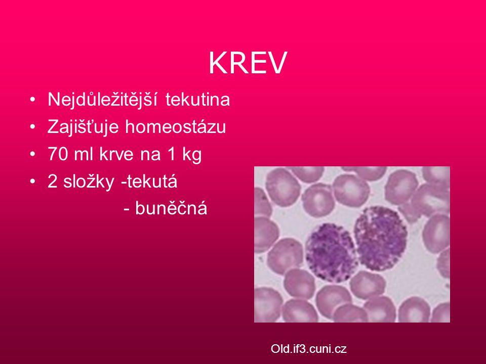 KREV Nejdůležitější tekutina Zajišťuje homeostázu 70 ml krve na 1 kg